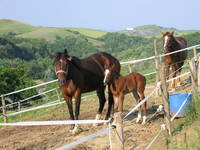Horseriding Tuscany Montaione Florence Siena